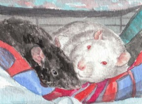 Art work by Drusilla Kehl, The Illustrated Rat