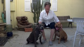 Bullet, Conni & another rescue Pit Bull