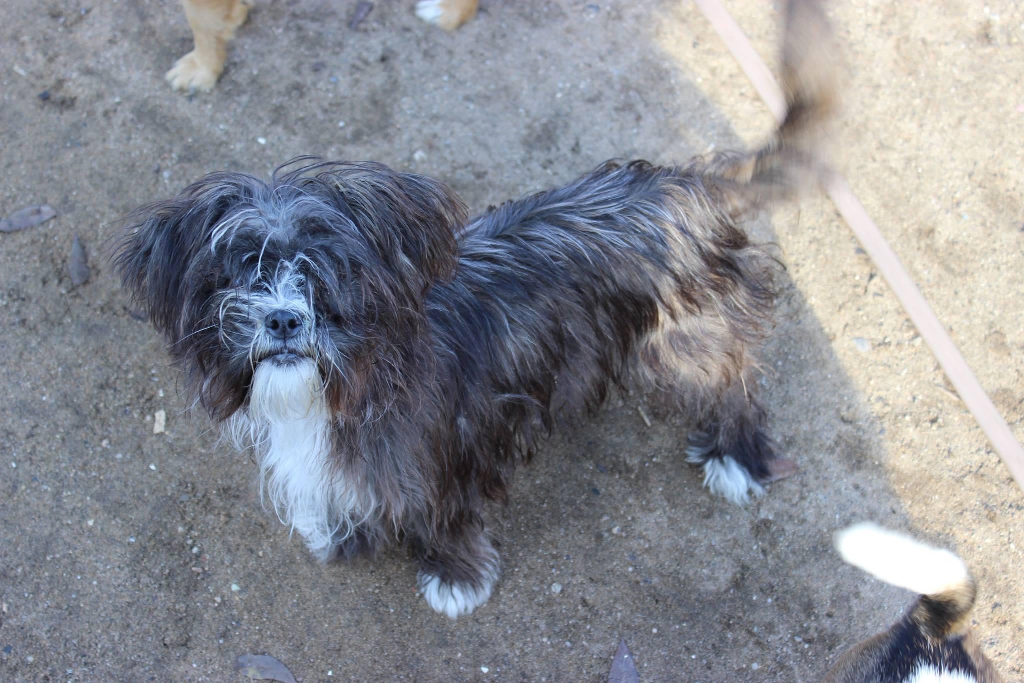 Animal Rescue of Fresno Stray Dogs