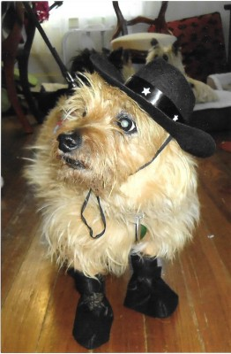 Muzzle Tuff Cowboy 001