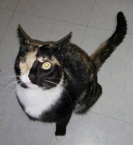 cat hourse