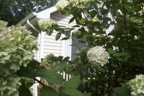flowers house