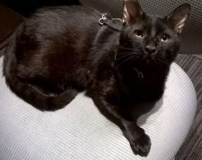 Miercoles rescued black cat