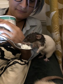 Fantasia eating ice cream after her surgery (with shaved armpit/chest)