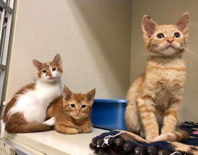 cat house cat rescue