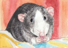 Artwork provided by Drusilla Kehl The Illustrated Rat