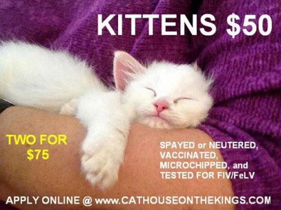 Kittens for adoption