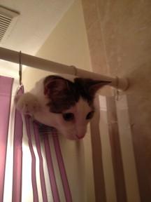 Cat in shower