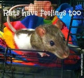 rats3