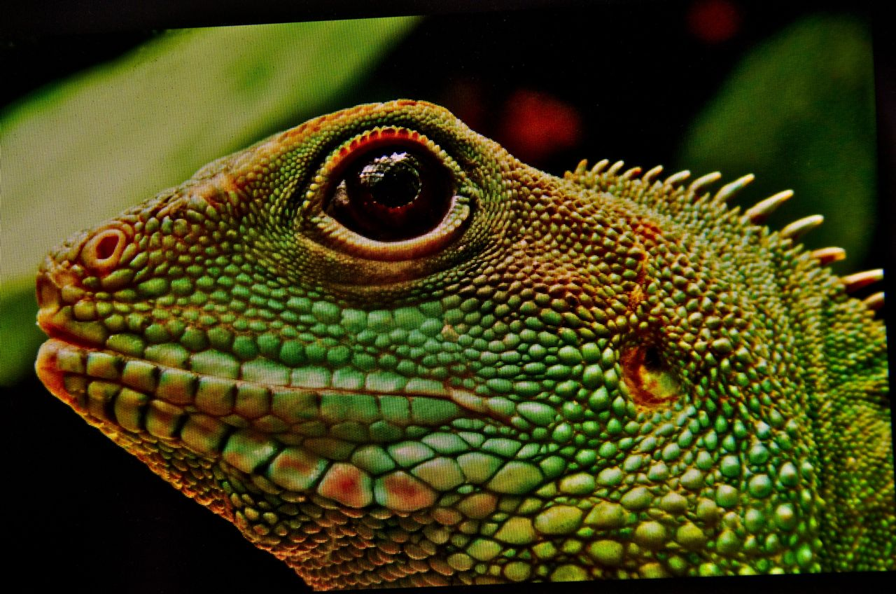 The Lizard: A Mystery Short Story   Kings River Life Magazine