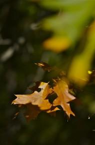 leaves ghost