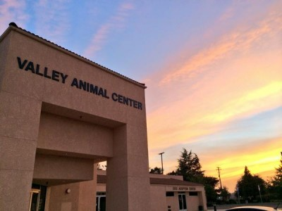 Valley animal center