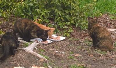 Selma cats