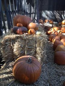 pp-pumpkins