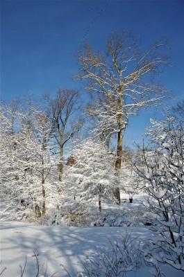 KRL SNOW #1