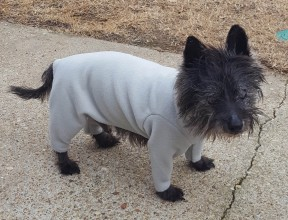Col. Potter Cairn Rescue dog