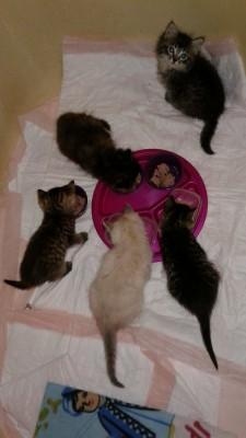 cat house kittens