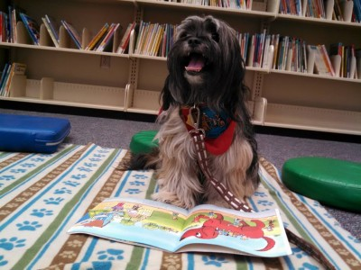 therapy dog