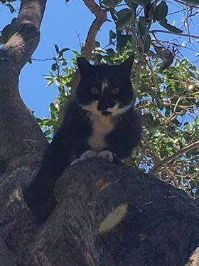 cat house cat