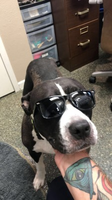 rescue dog valley animal center
