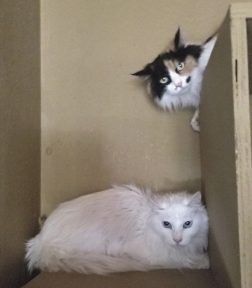 cat house cat rescue